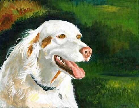 Sinz-white-dog382